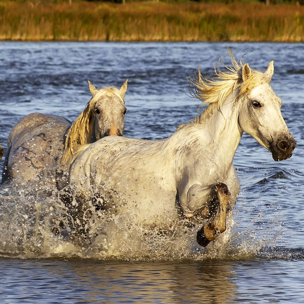 Nature and Traditions of Camargue